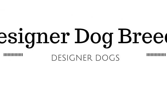 39 Designer Dog Breeds