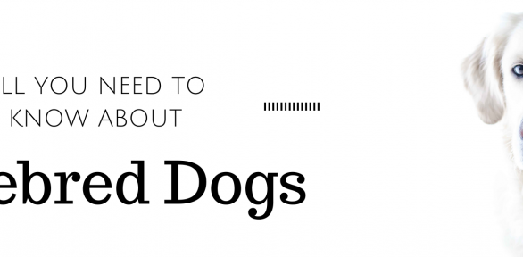 All You Need to Know About Purebred Dogs (+ a complete list!)
