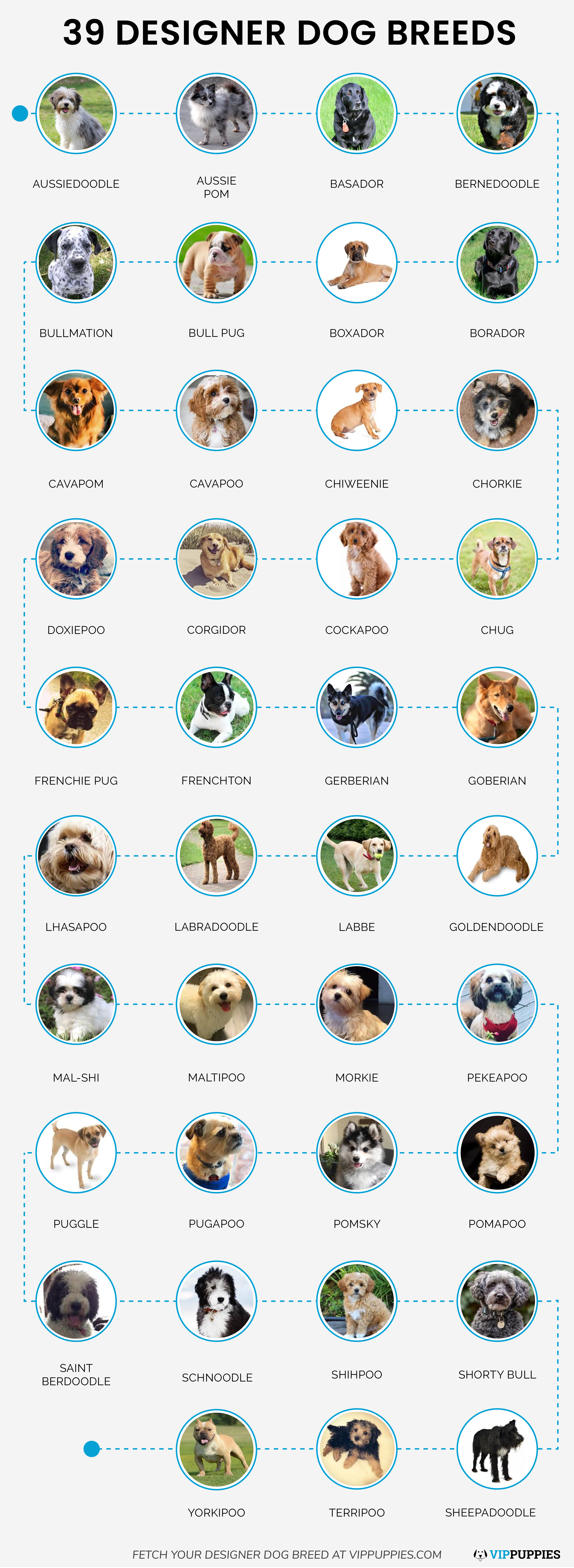39 Designer Dog Breeds Infographic