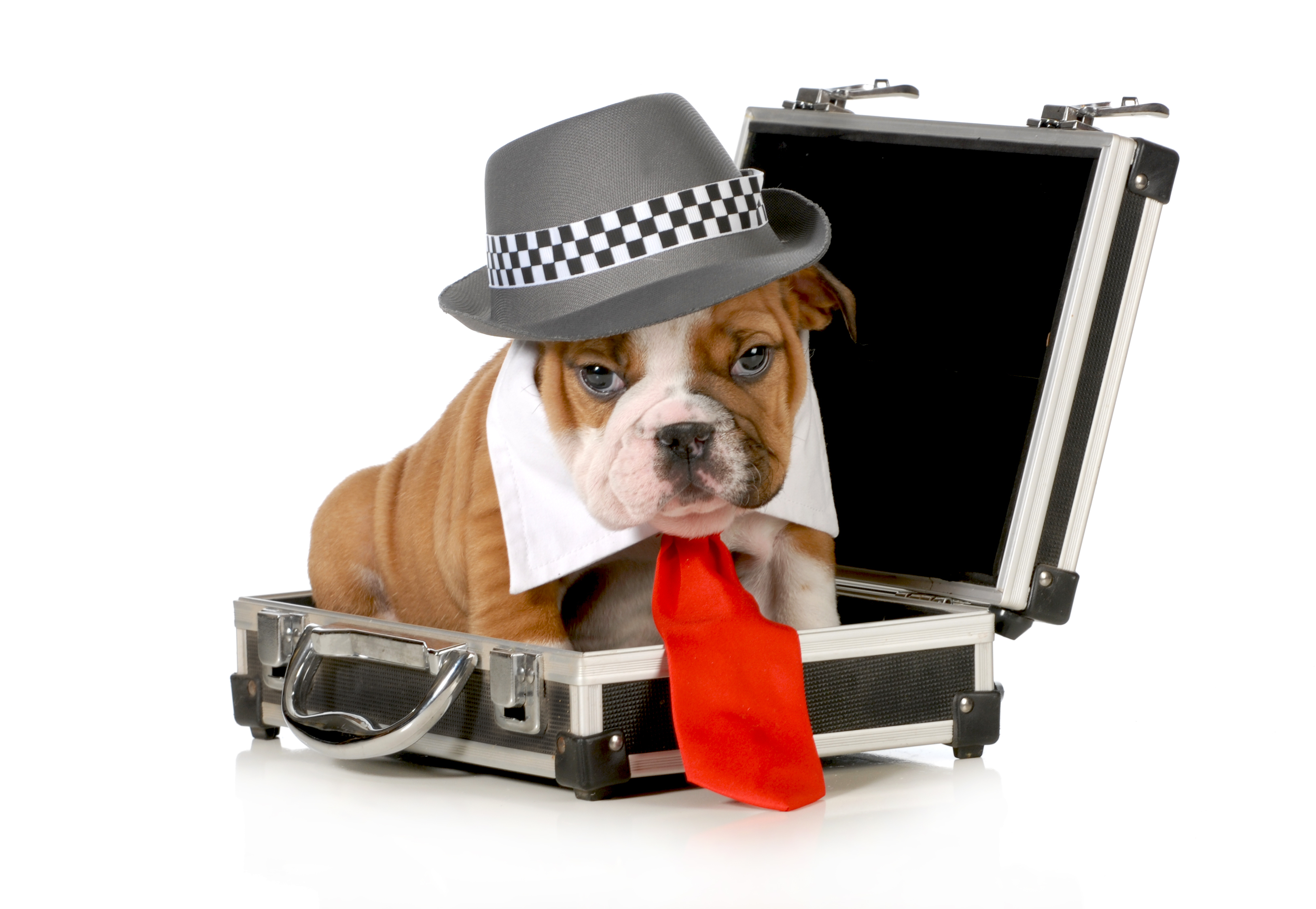 Dog with hat and tie in suitcase ready to travel.