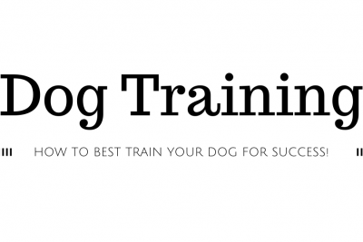 How to Best Train Your Dog for Success!