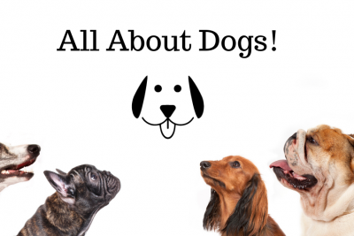 All About Dogs! (FAQ included)