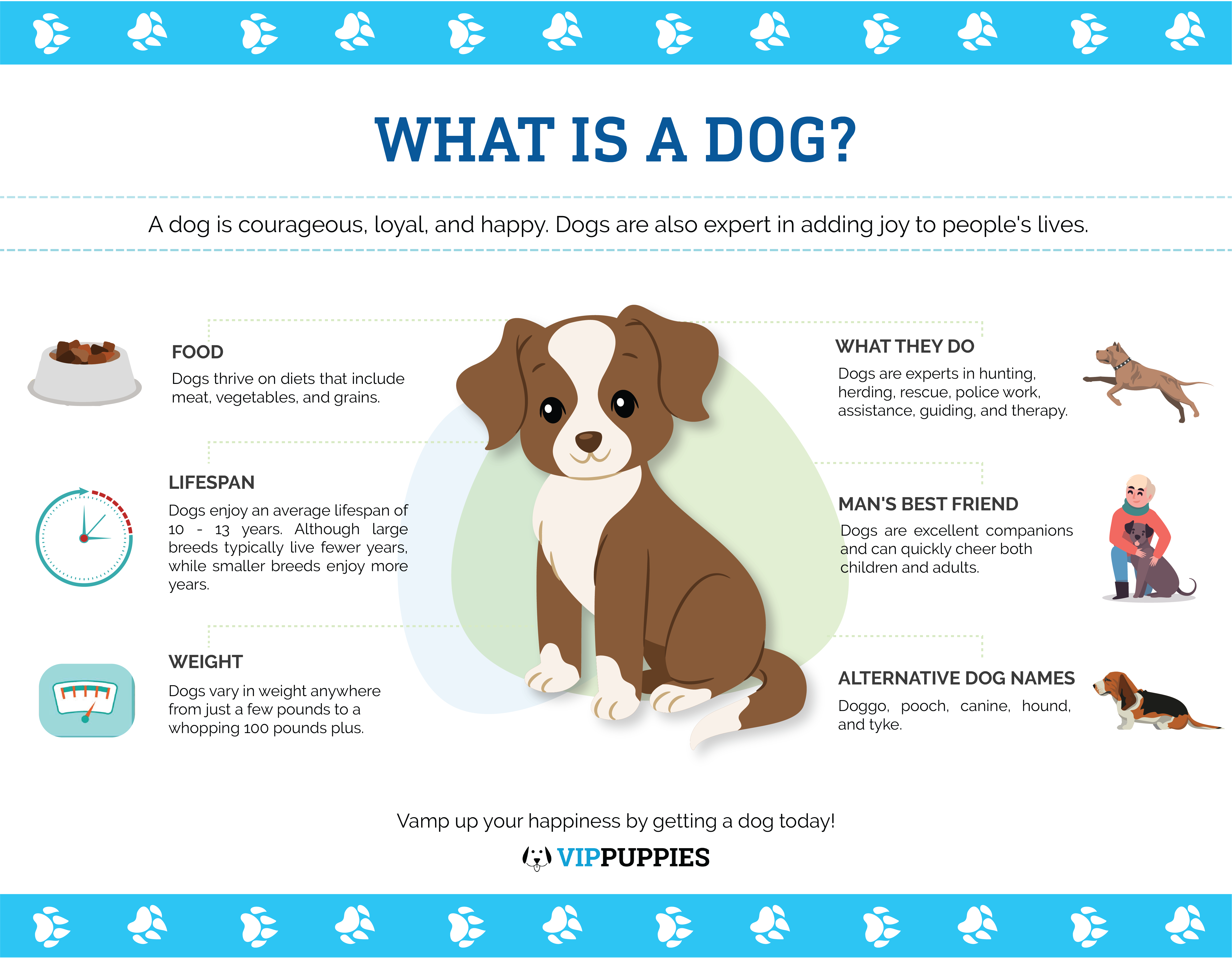 What is a dog? (Infographic)
