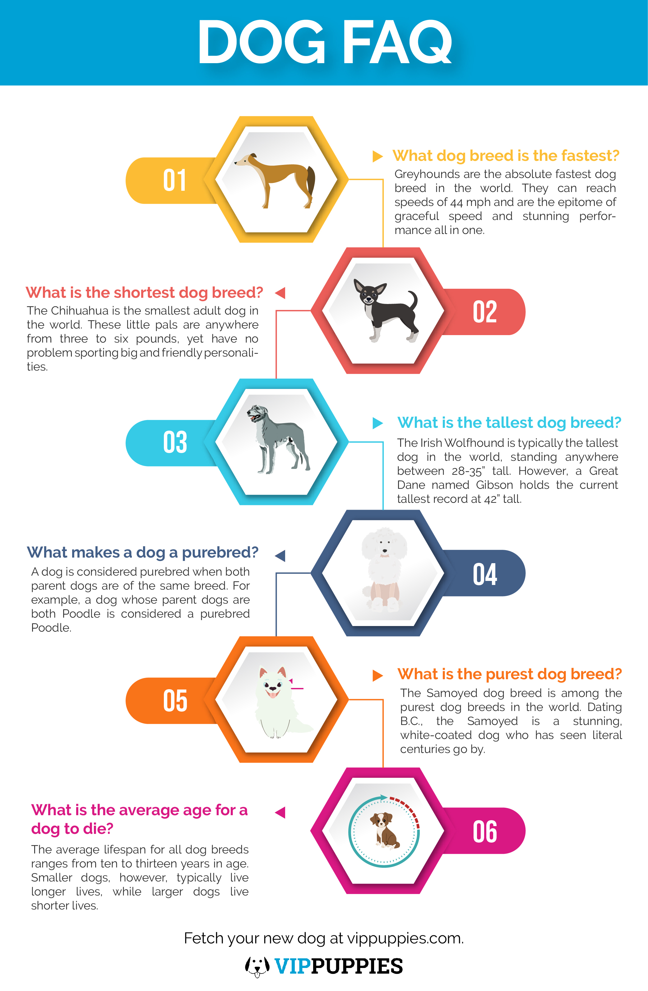 Frequently asked questions about dogs infographic.