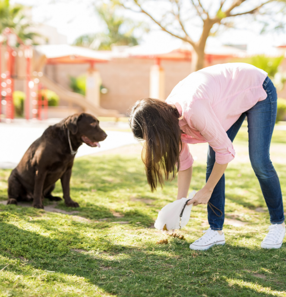 Responsible Dog Ownership: What it IS plus how to do it.