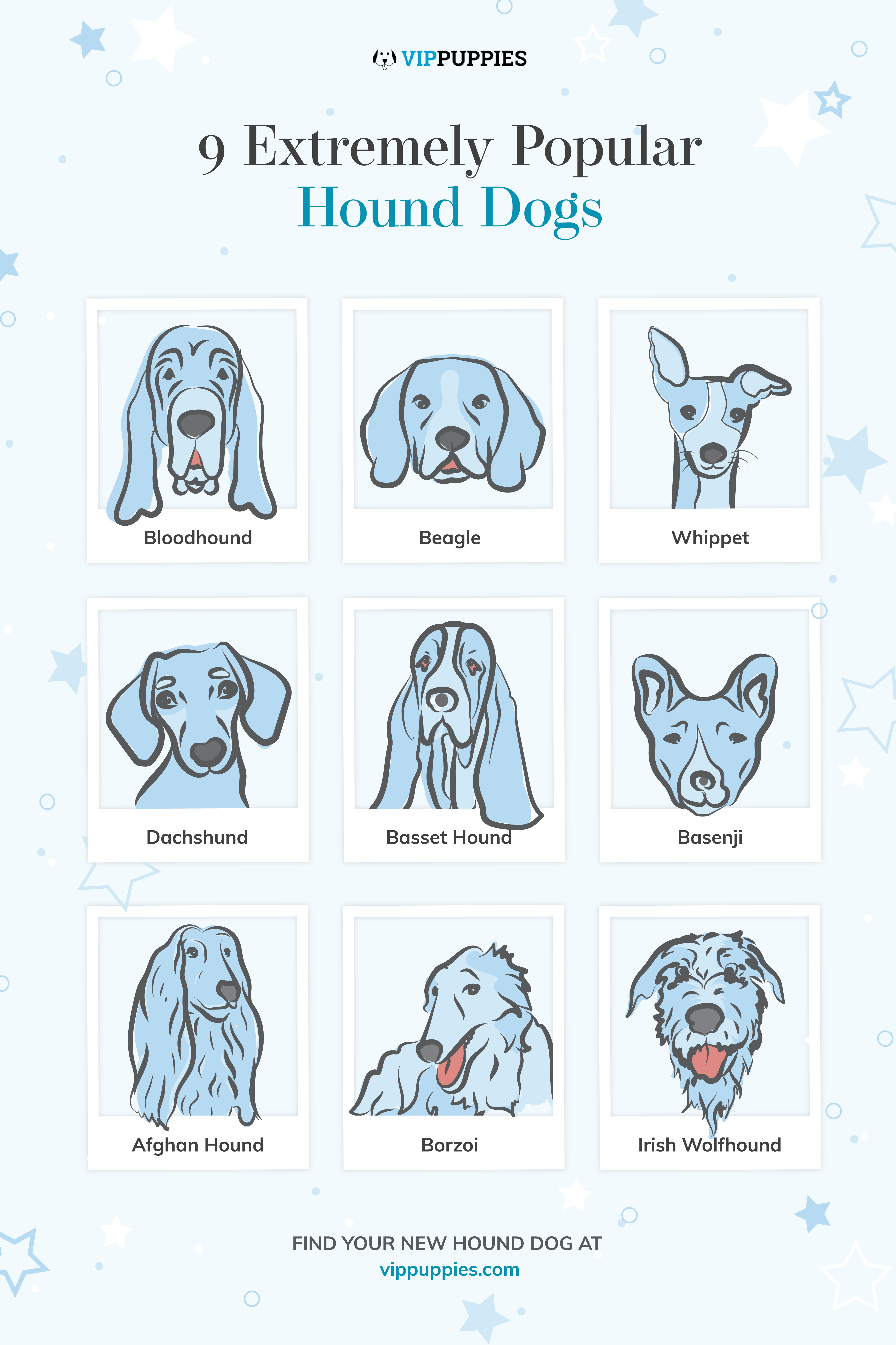 9 Extremely Popular Hound Dogs