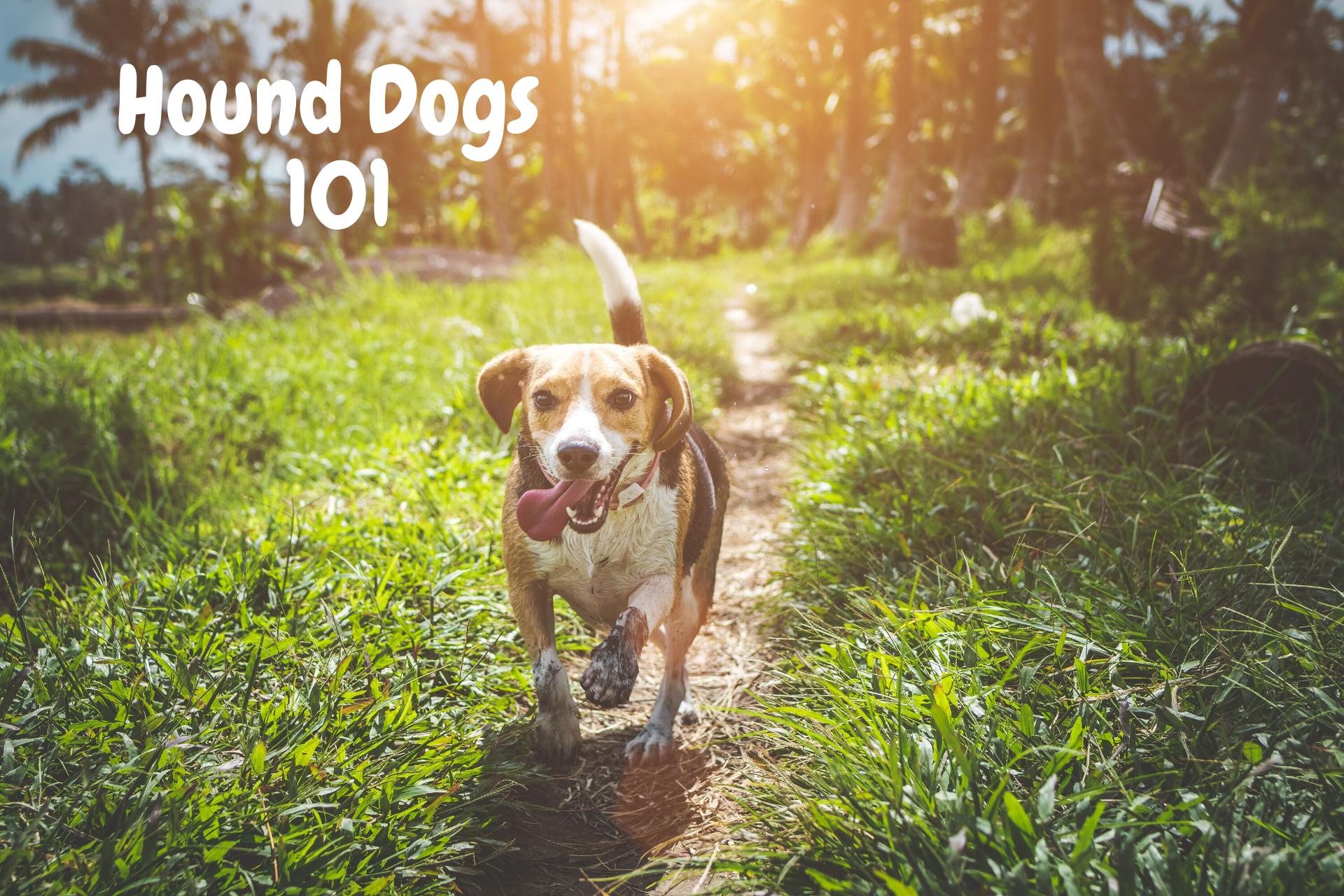 What You Should Know About Hound Dogs [+ Free FAQ]