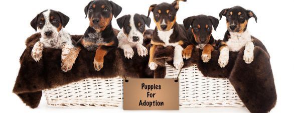 What Nobody Tells You about Dog Adoption