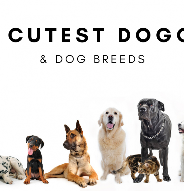 The Cutest Doggies & Dog Breeds