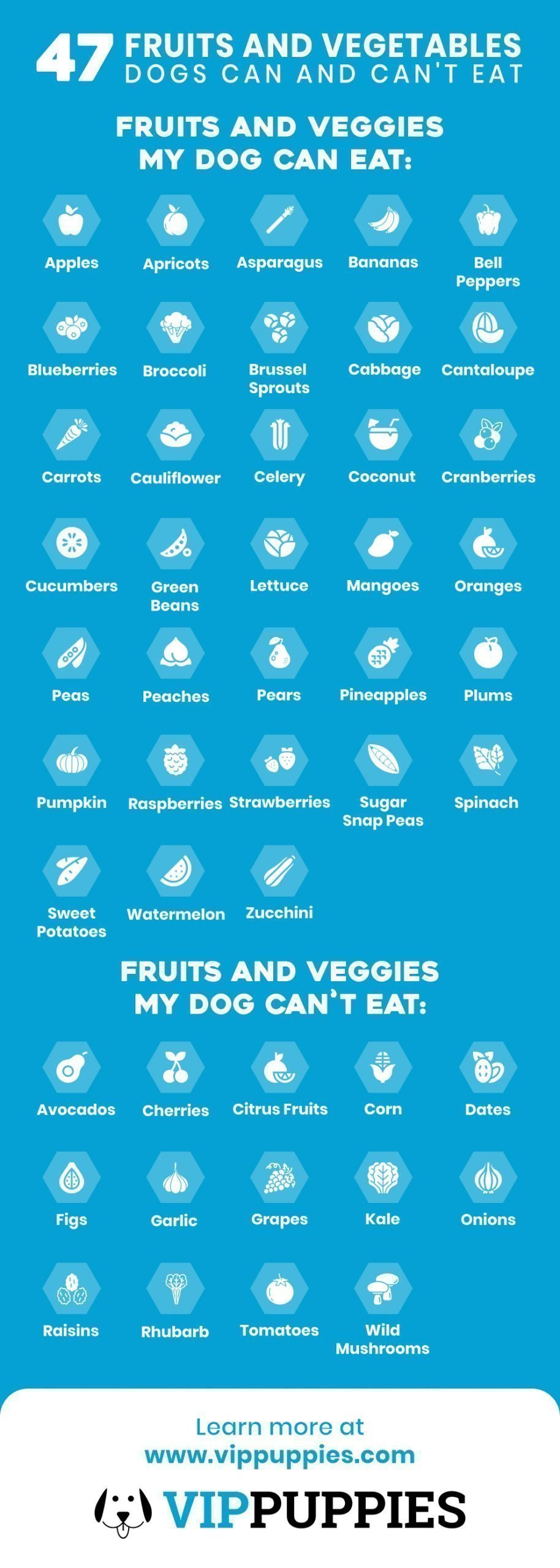 Fruits & Vegetables Dogs can and can't eat infographic