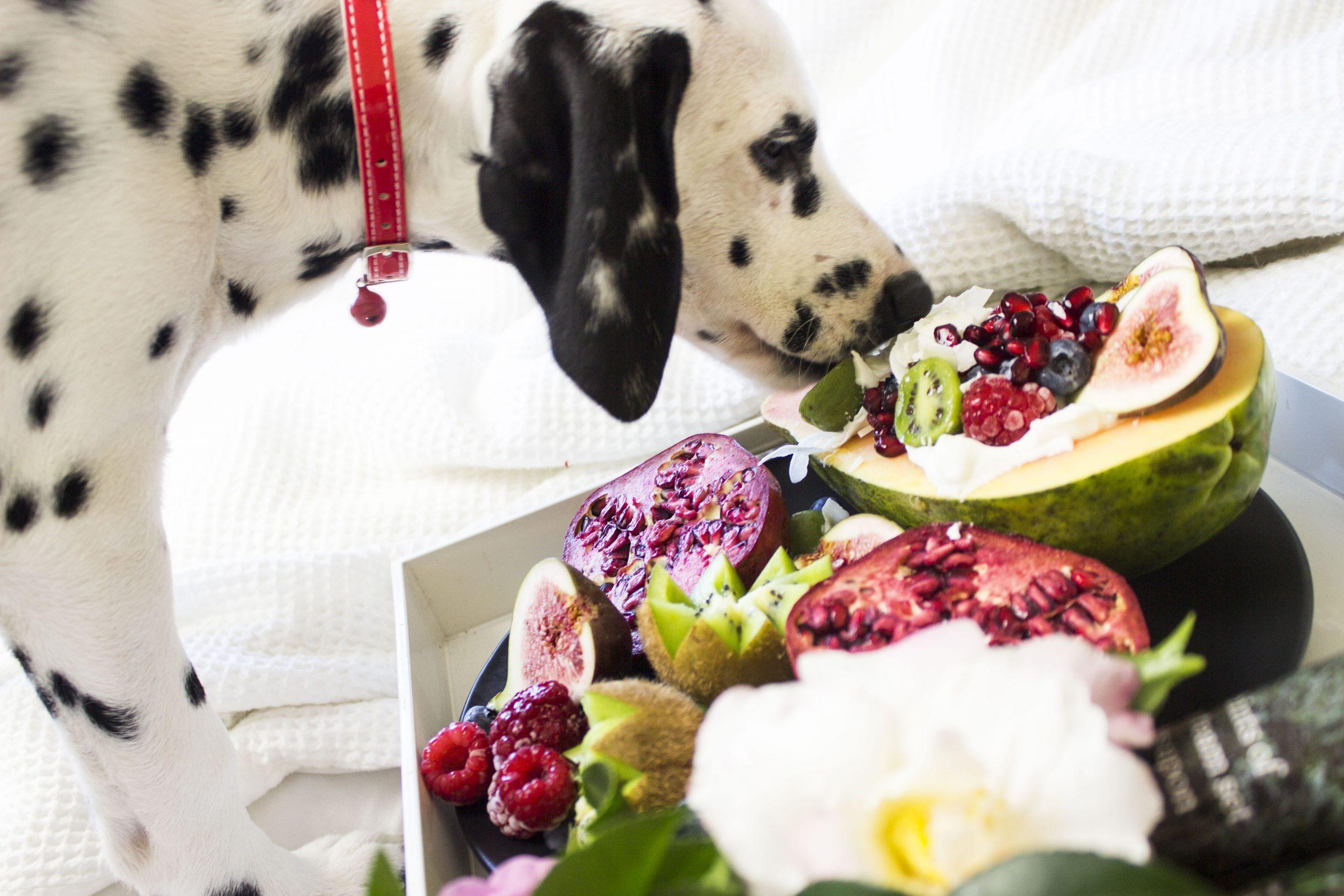 Dalmatian dog eating a variety of fruits
