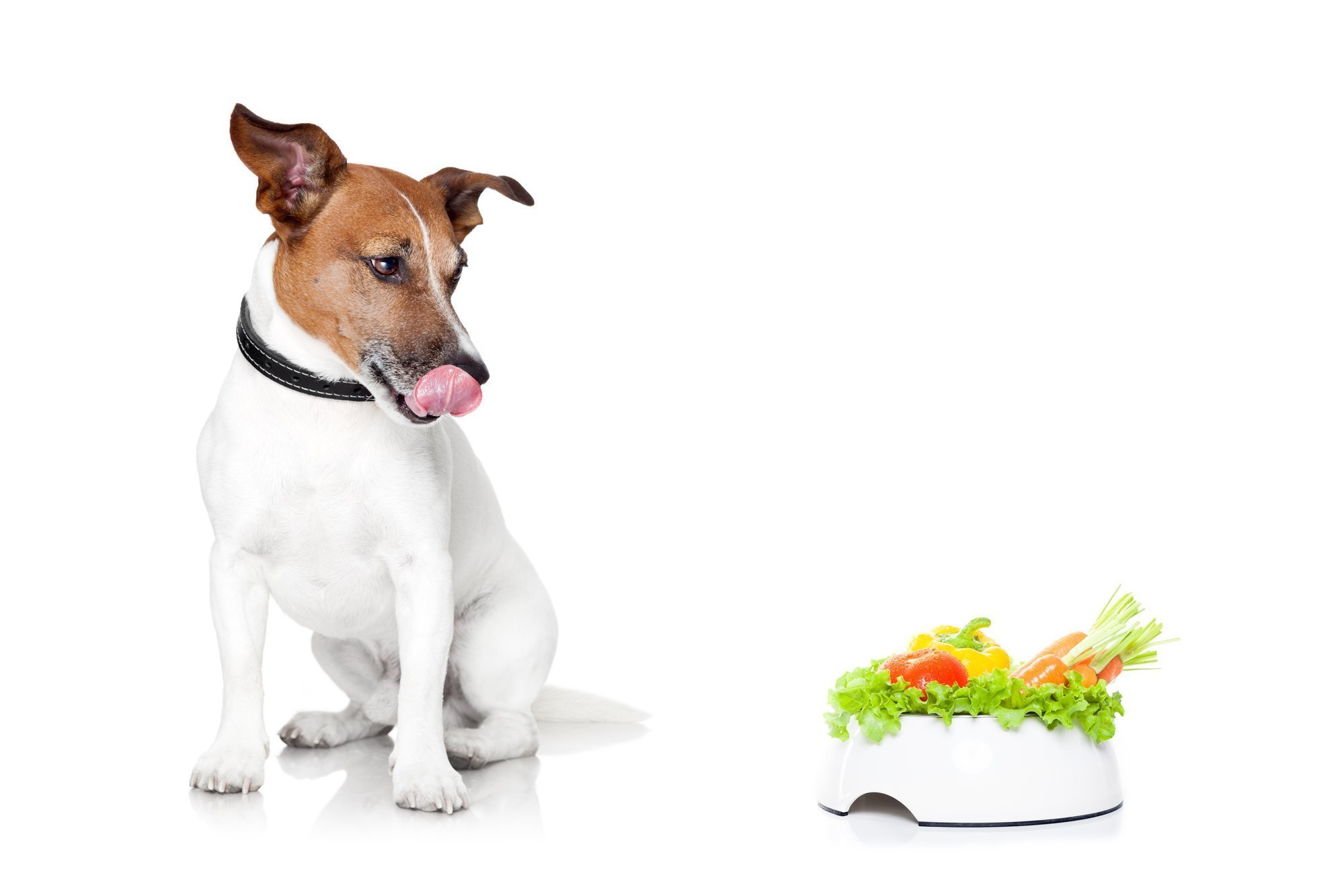 Fruits and Veggies Dogs Can and Can't Eat