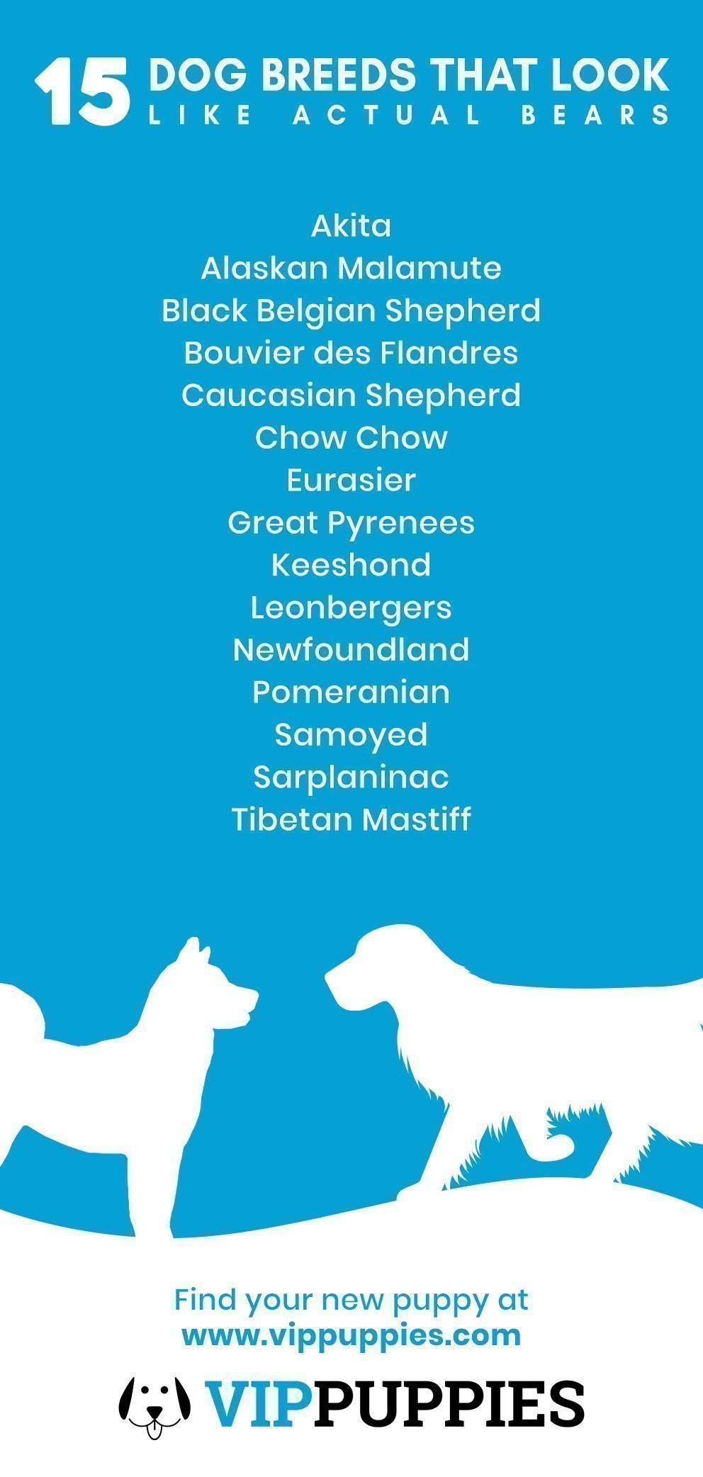 15 dog breeds that look like actual bears infographic