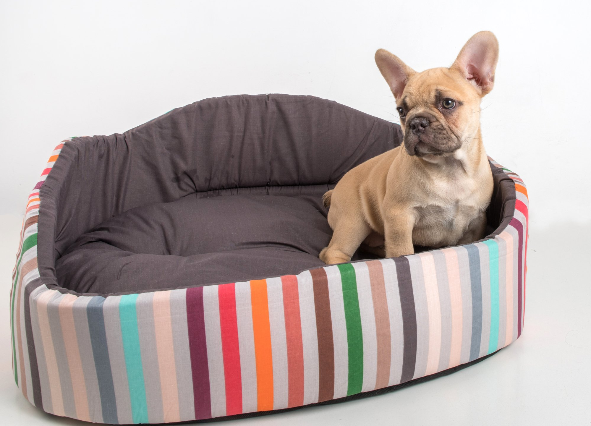 French Bulldog puppy resting on a dog bed.