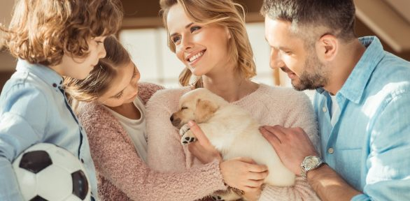 Your Puppy's First Day Home: Here's What You Want to Know!
