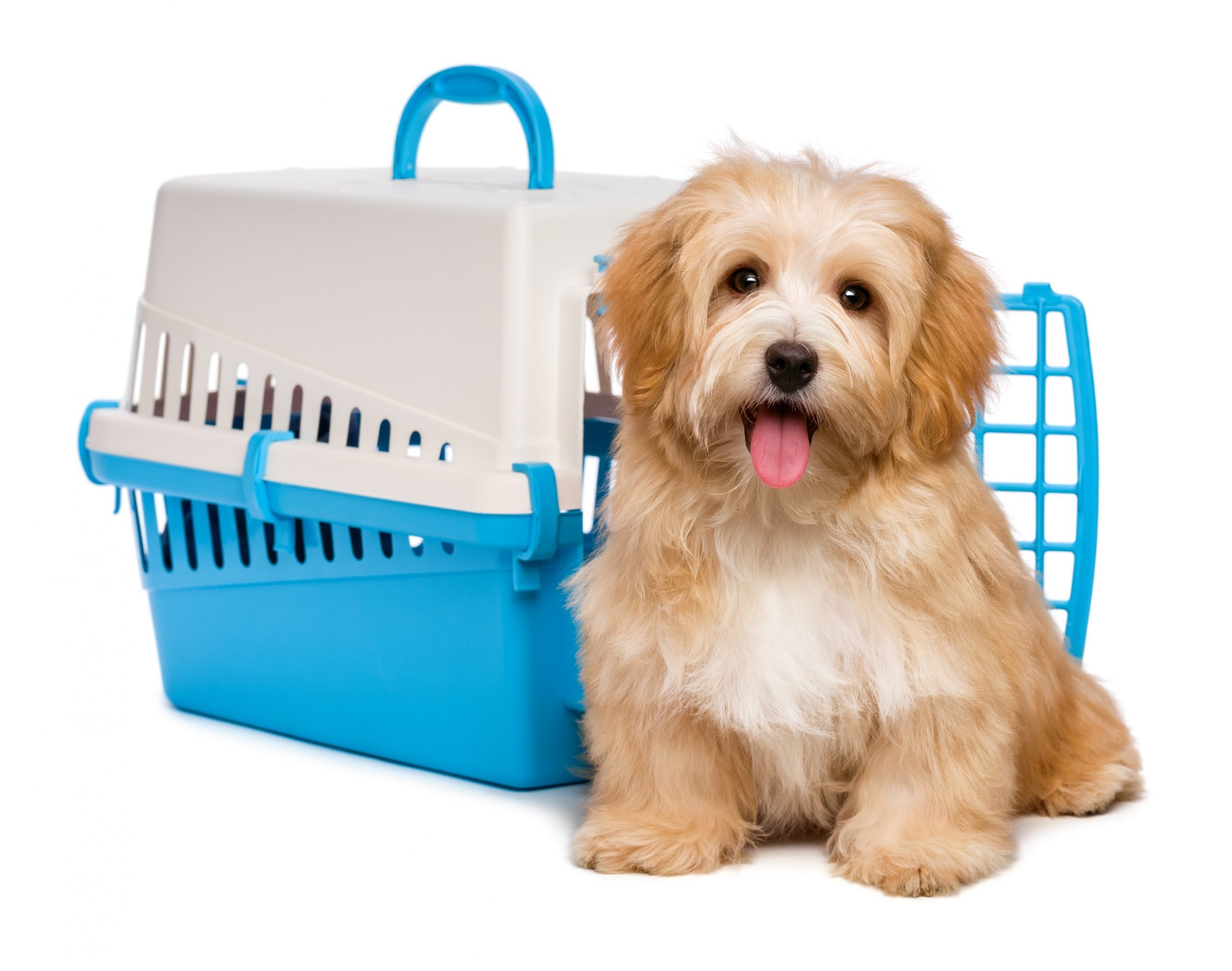 Day four: Crate Training – How to Get it Right
