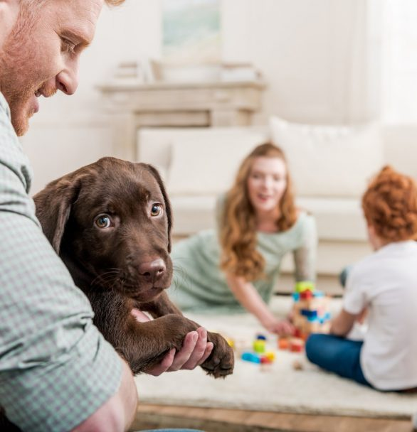 Day Five: The One Thing Dog Lovers Forget When Bringing a Puppy Home