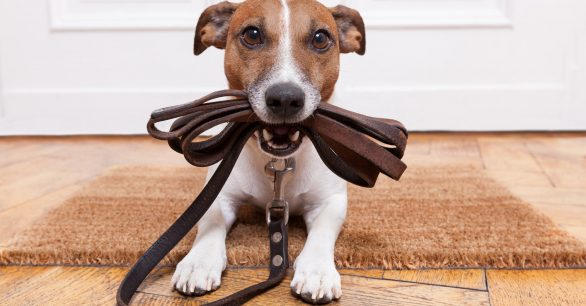 Day Seven: The House Rules Your Puppy Needs!