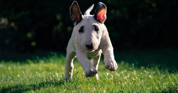 31 Terrier Dog Breeds + What to Know About Them!