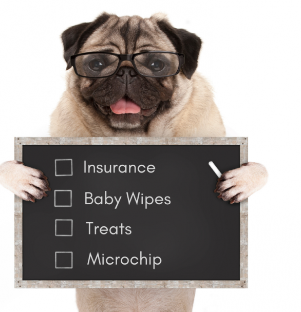 New Puppy Checklist in 2021 | What to Have When Your Puppy Comes Home (+ Printable)