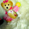 LadyCosmo - female pup Maltipoo for sale near Houston, Texas