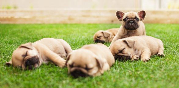 Puppers: What is a Pupper? (Plus how to get one!)