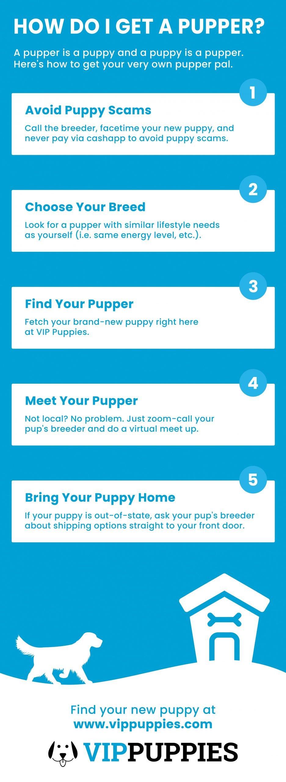 HOW DO I GET A PUPPER INFOGRAPHIC