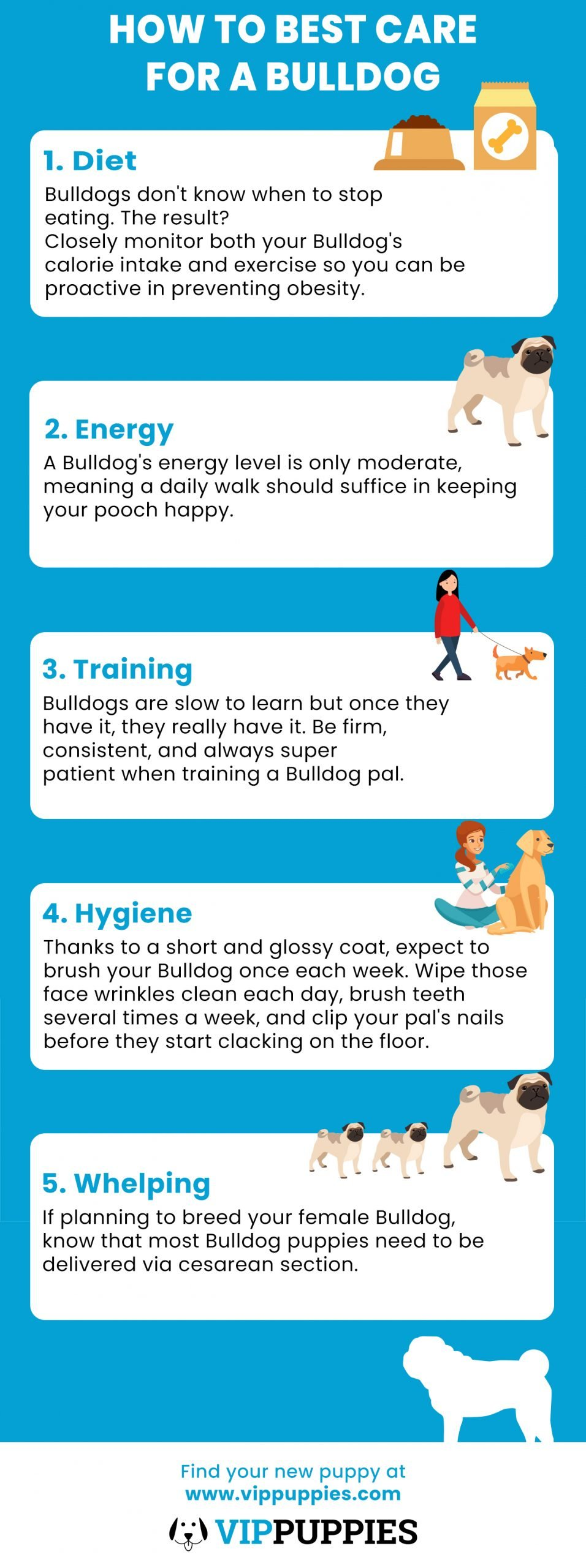 How to Best Care for a Bulldog Infographic