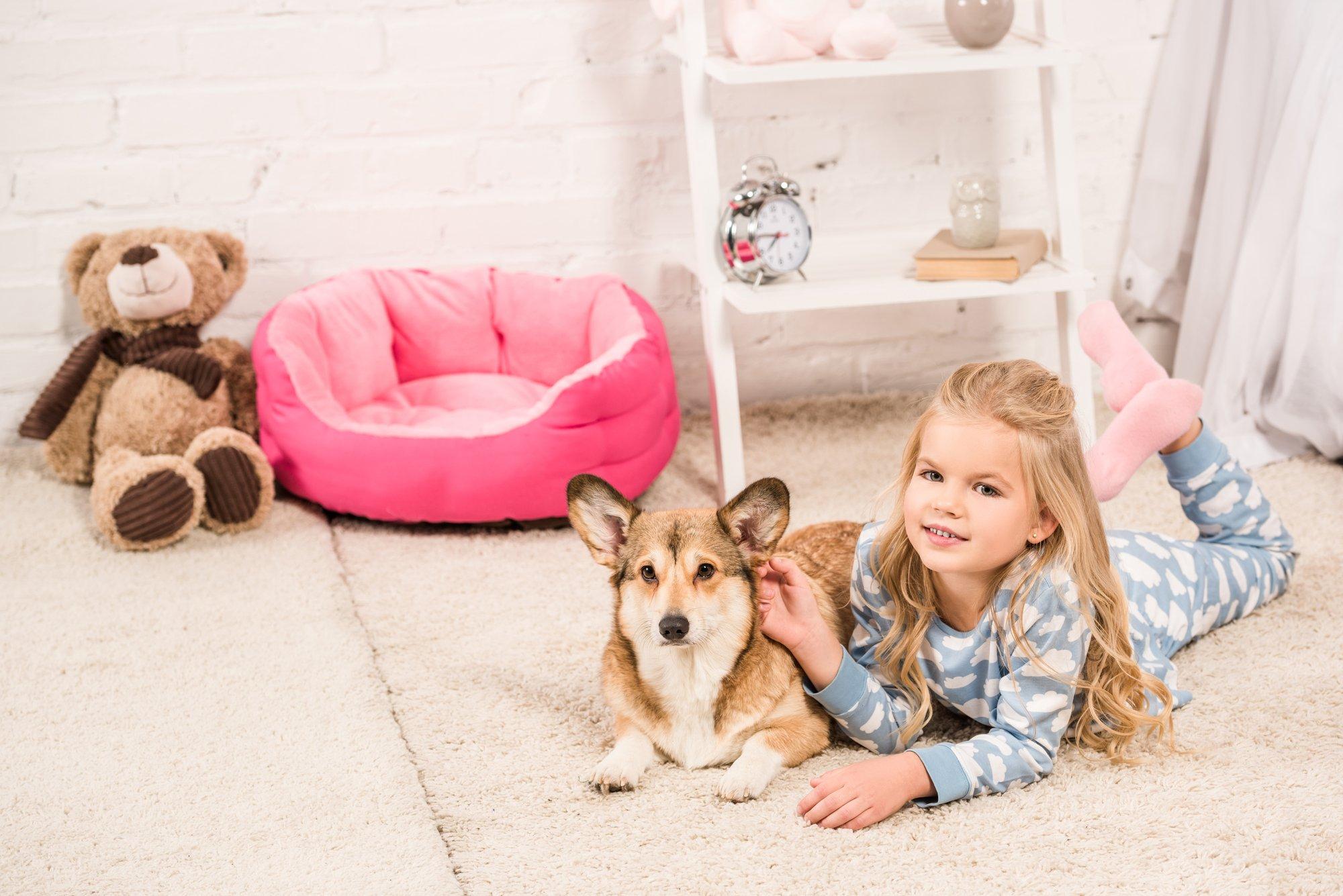 Smiling child in pajamas looking at camera and stroking welsh corgi dog at home