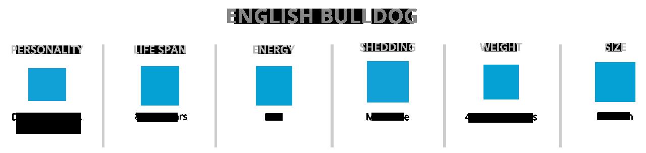 English Bulldog Breed Information