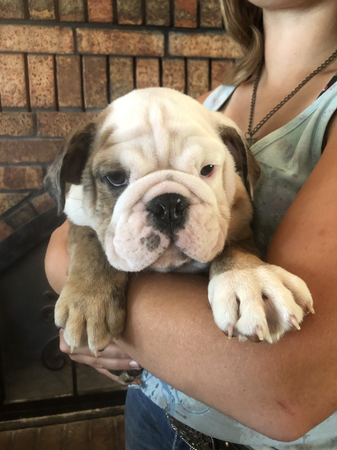 English Bulldog Right Patch doggie for sale in Cushing, Oklahoma