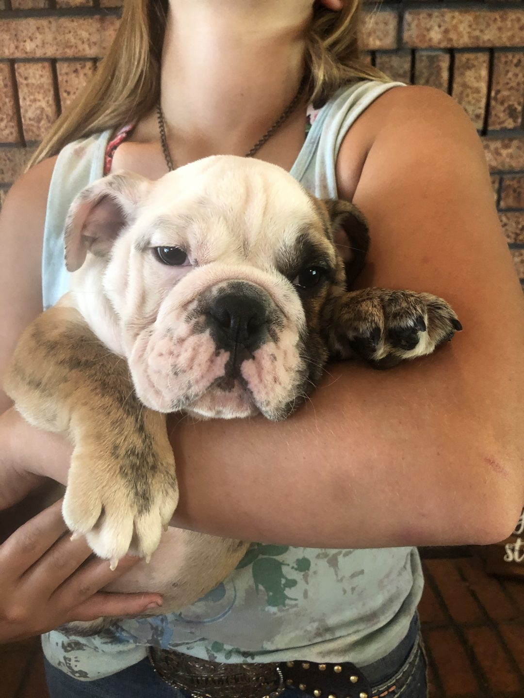 English Bulldog Male Left Patch puppy for sale in Cushing, Oklahoma