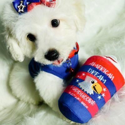 VuittonBear - Maltipoo male puppie for sale in Houston, Texas
