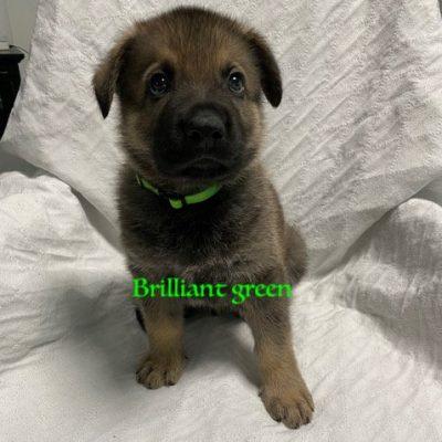 Brillant Green