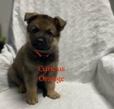 Curious Orange