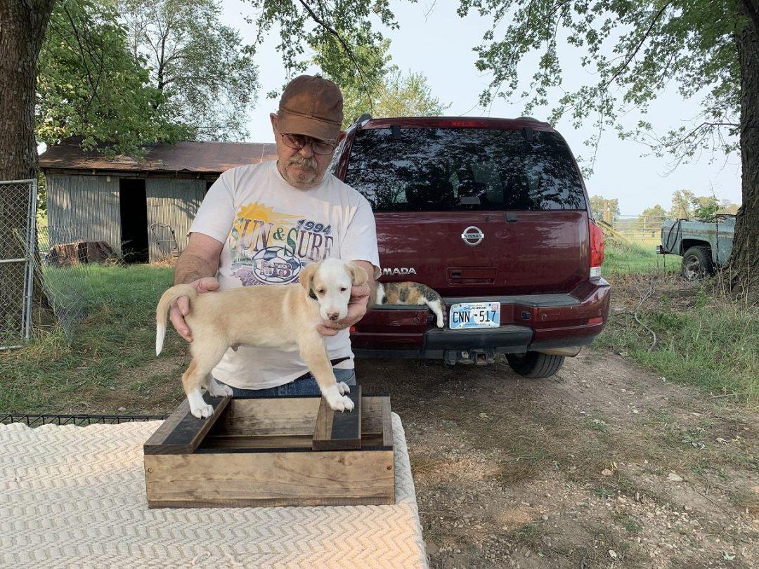 Sherlock Holmes - AKC Portuguese Podengo male puppy for sale in Colcord, Oklahoma
