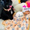 MissJuicy - pup Maltipoo female for sale in Houston, Texas