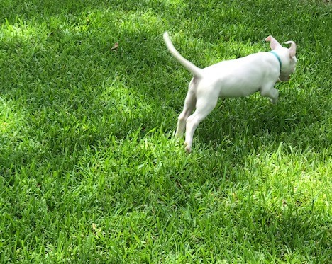 lily_in_grass-jpg