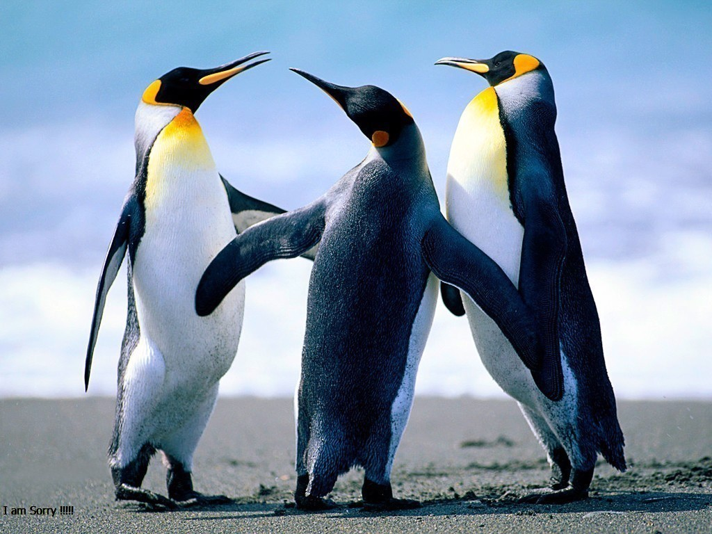 penguins-jpg